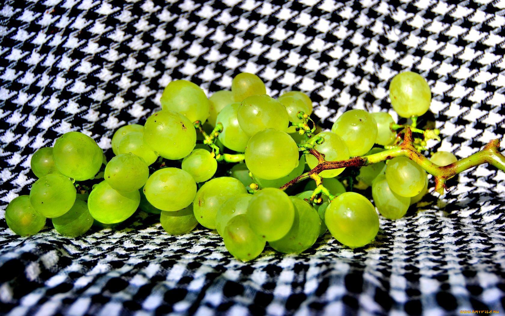 Виноградные грозди микробиология картинки становится